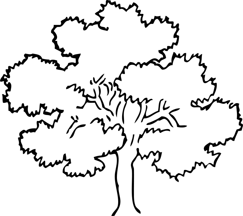 beech tree coloring pages - photo#28
