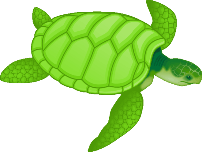 Cartoon Sea Turtle Clip Art