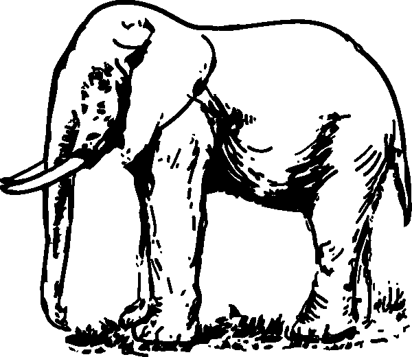 Line Drawings Of Animals Free Download : Elefante para colorear dibujos online